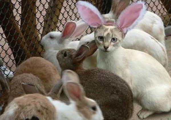Bunny-Kitty2