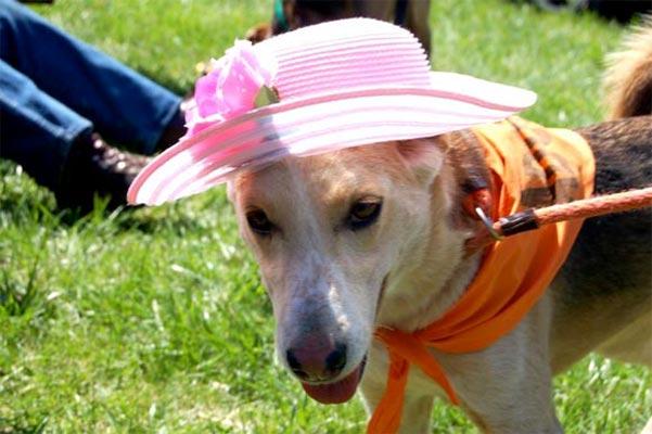 dog-bonnet-featured