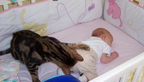 Cat-Baby-Diaper - Lasting friendships start early - Inspiration & Hope