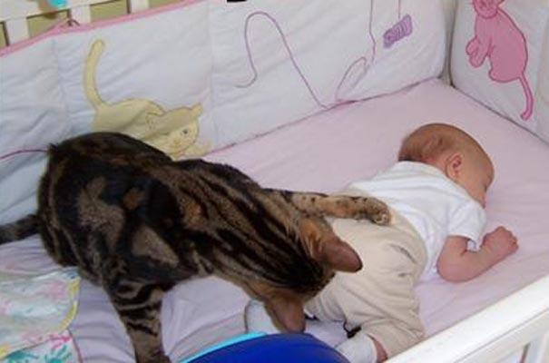 Cat-Baby-Diaper2