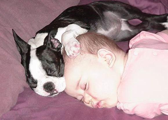 Baby-Pug