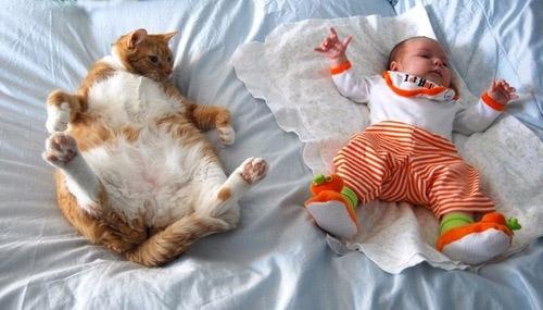 cat-baby-bed
