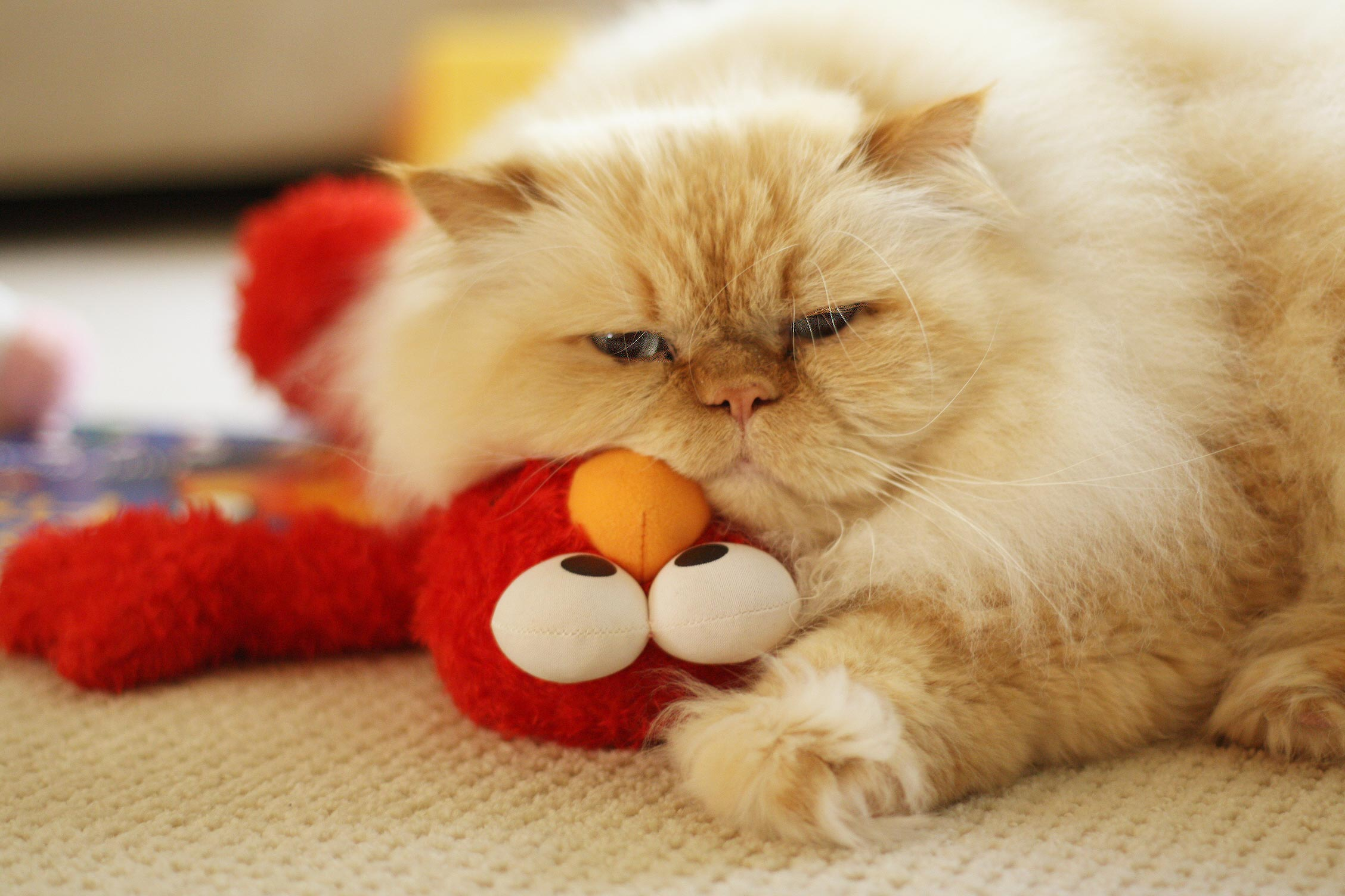 MAtty-Elmo