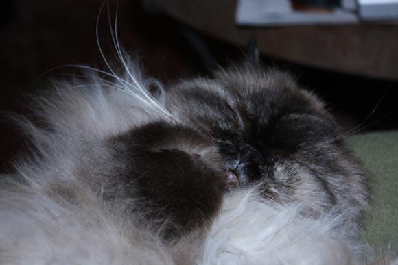 Marcy-sleeping