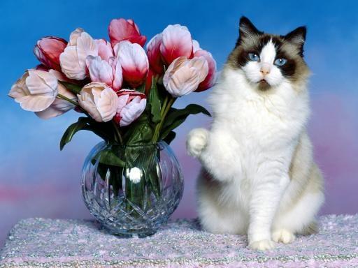 cat-flowers
