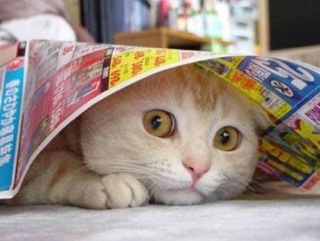 cat-underpaper