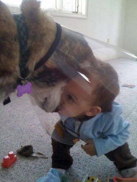 kid-dog-cone