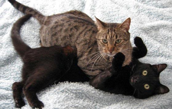 cats-wrestling