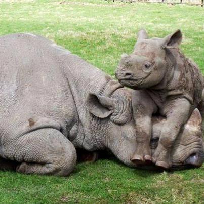 rhino-baby-mom