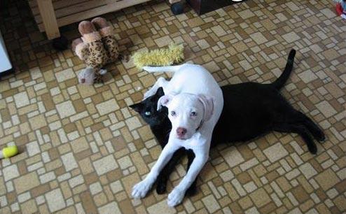 DOG-CAT-RUG