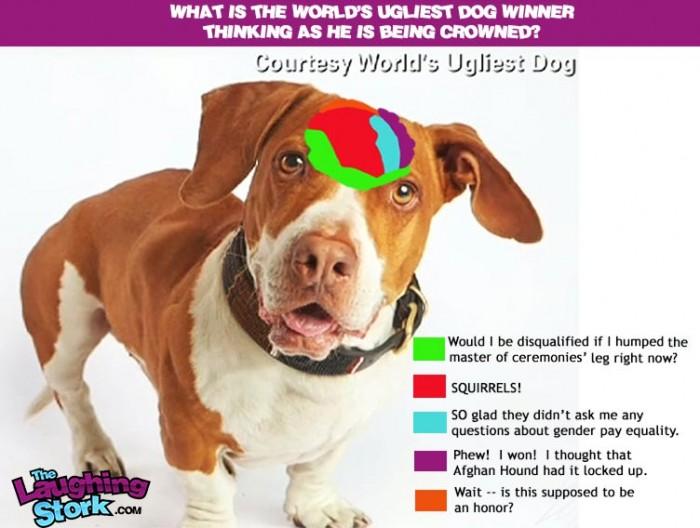 worlds-ugliest-dog-2013