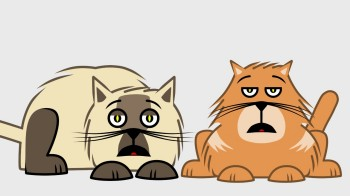 Cats-Bio