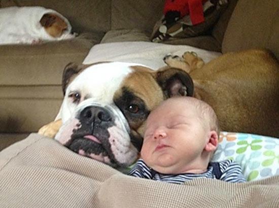 dog-baby-sleeping2